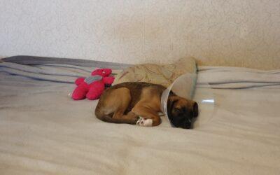 Karma okiem właściciela: Poppy i Greenheart-Premiums Puppy All Breeds