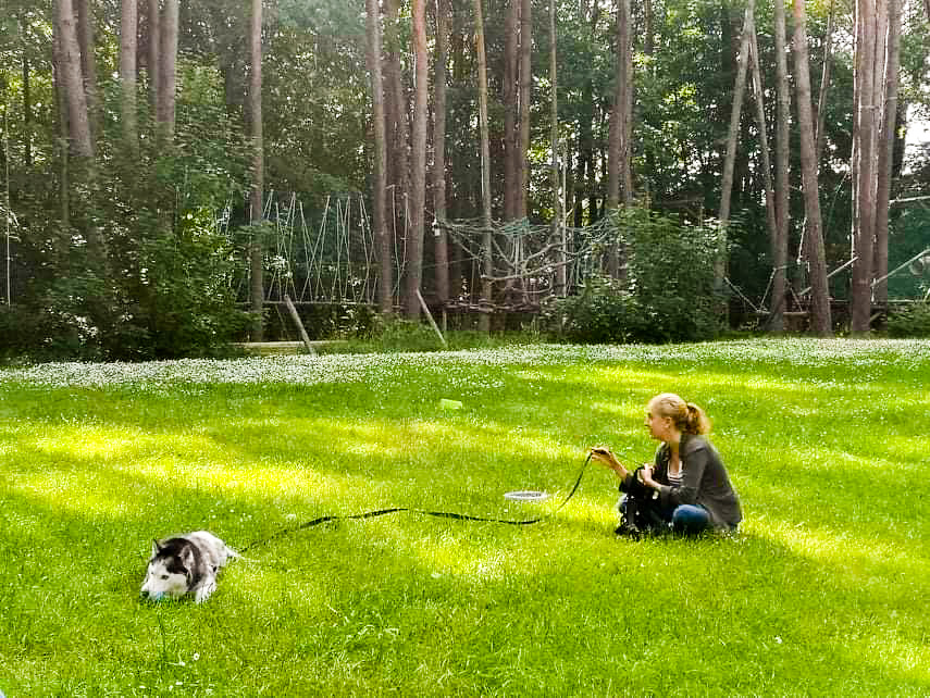 pracować z psem